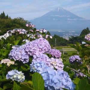 長尾峠ポタと金時山に行く途中までハイキング(紫陽花、金時山登山道、ペットボトルクーラー)