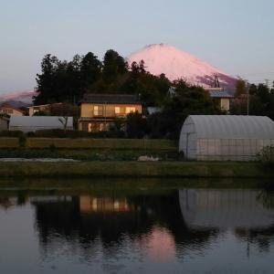 新道峠~富士五湖(富士芝桜まつり 、芝桜、鹿カレー、超絶景富士山、平成最後のライド)