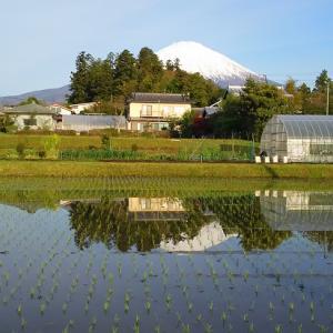 令和元年1回目富士スバルライン(山中湖パノラマ台、信水堂、富士山五合目ヒルクライム)