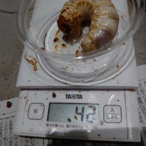 タランドゥス測定