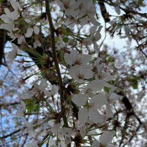 春のお散歩〜ランニング〜アマゾソでお買い物