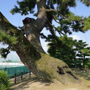 修行の枝をきられ、曲げられん事疑なかるべし