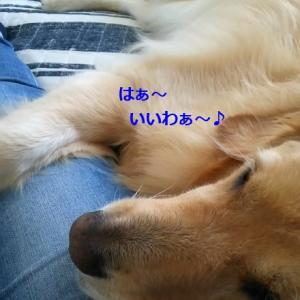 高級?クッション♪ & ブログ6年目突入ーーっ!!