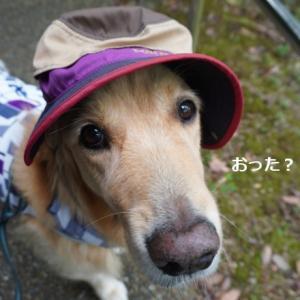 帽子男子♪