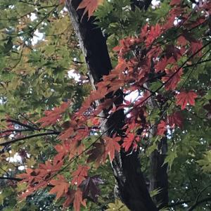 御朱印ポタリング【飛行神社〜大原野神社】