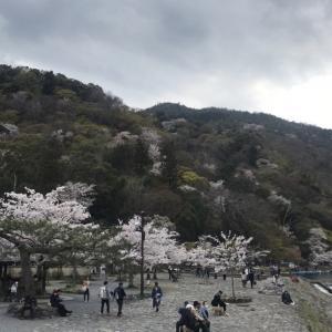 桜満開の京都をポタリング