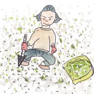 ジャリのとこの草抜きはめんどいが