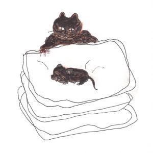 豚糞の上の赤ちゃん猫