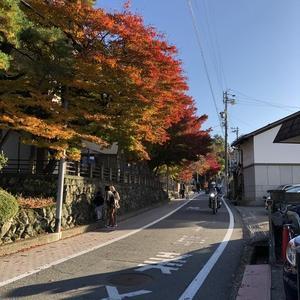 秋の城山へ