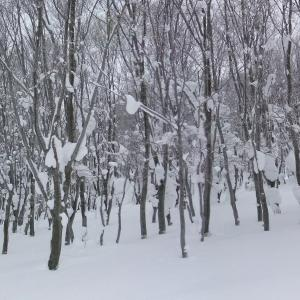 久し振りに八甲田で山スキー
