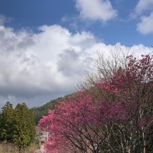 ふたたび、お伊勢山から花咲山へ