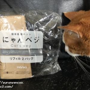 猫草デビュー