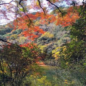 2度目☆秋の旧福知山線(生瀬~武田尾)廃線跡ハイキング