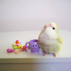 フルーツポンチ(鳥のおもちゃ)