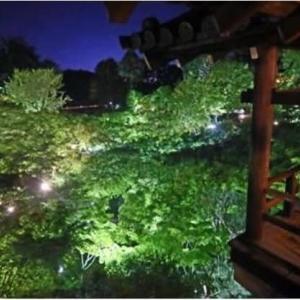 ◆東福寺で青もみじライトアップ、未来を照らす希望に!