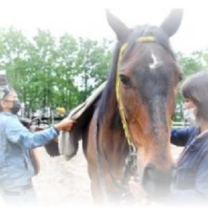 ◆馬の殺処分は年間7千頭、「使い捨て」の現実 元騎手が始めた牧場