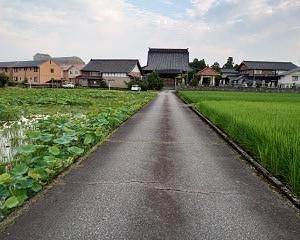 舟橋村 無量寺と蓮