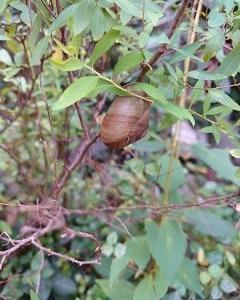 枝にカタツムリ