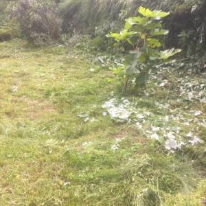 草刈りマサオ