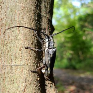 日課のウォーキングで見つけた虫