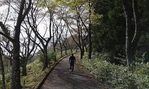 落ち葉の上を歩ける季節ですね。