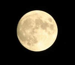迷い犬情報19年092号(12/13更新)「昨日の満月を見て」