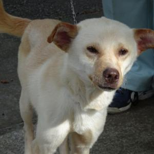 迷い犬情報20年033号(6/10更新)「犬の登録台帳って?」