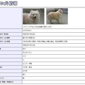 迷い犬情報20年039号(7/10更新)「飼う資格」