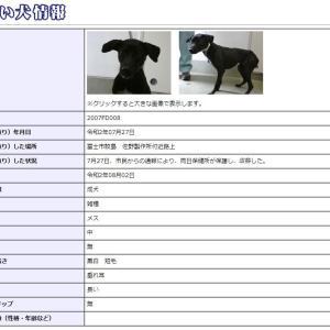 迷い犬情報20年043号(7/31更新)「老犬は返還」