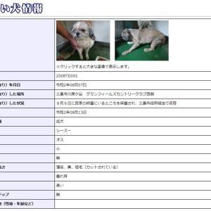 迷い犬情報20年045号(8/8更新)「8月最初はシーズー」