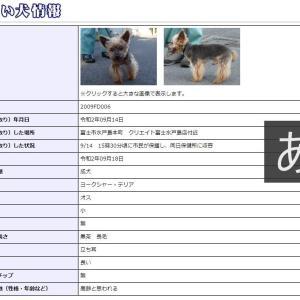 迷い犬情報20年058号(9/15更新)