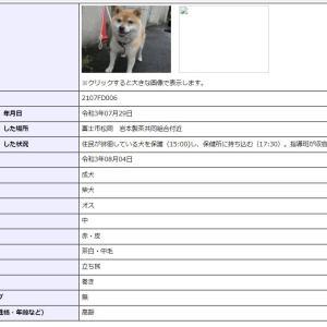 迷い犬情報21年052号(7/30)『一難去ってまた一難』