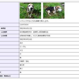 迷い犬情報21年069号(9/22) 『伊豆市で柴犬風』