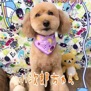★ わんこの Happy shot ★
