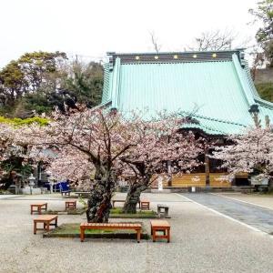 桜・夕日・ホテル