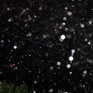 未明撮影の雨