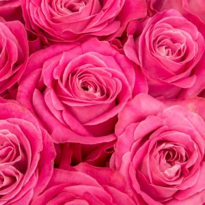 女の子はみんなピンクがお好き?