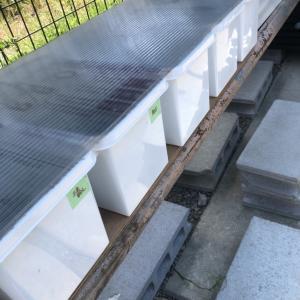 針子が泳ぐ容器の下に敷くベニヤ板