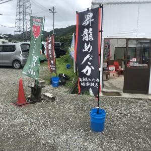 兵庫県にある昇龍めだかさんへ行ってきた