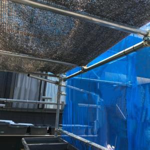 メダカの飼育容器から、少し高い位置に遮光ネットを張ると、効果抜群‼