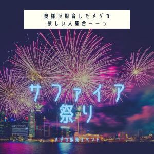 サファイアと、松井ヒレオーロラ黄ラメと、ハギタ式ヒレ長白幹之の販売スタート