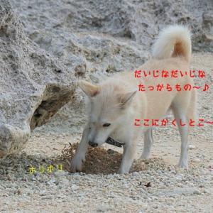 宮古島ロックダウン?!