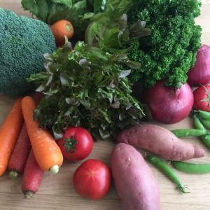 野菜を一日350gも摂るなんて…無理じゃないのだ