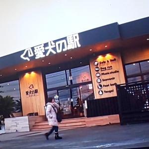 愛犬の駅!Σ( ̄□ ̄;)