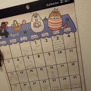 にゃんこカレンダー(*´ω`*)