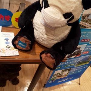 和歌山のパンダちゃんかな?
