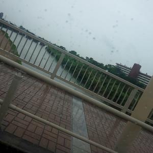 西宮ガーデンズをぶらぶら~(* ´ ▽ ` *)ノめちゃ歩きました