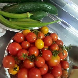 今日の収穫お野菜~(*≧з≦)
