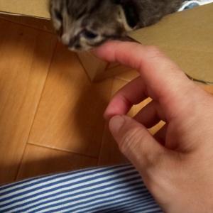 小さなちいさな保護猫さん(*^^*)