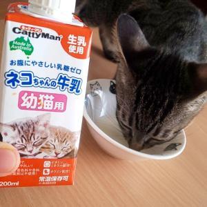 赤ちゃんベビにゃんのミルク( ≧∀≦)ノ